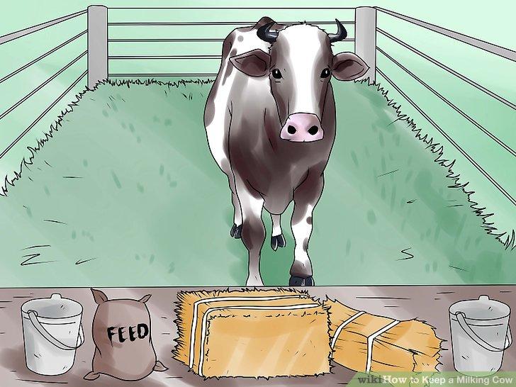طرح توجیهی گاو شیری 10 راسی سال 96