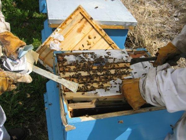 سرمایه لازم برای زنبورداری
